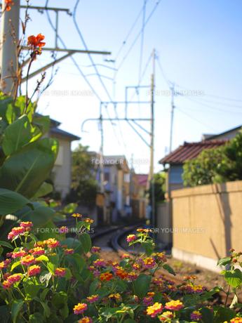 花と線路の素材 [FYI00387353]
