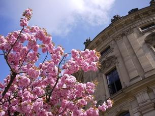ドイツの桜の写真素材 [FYI00387364]