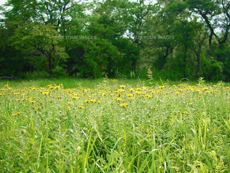 緑の草原の素材 [FYI00387365]