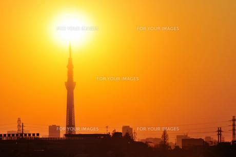 夕日とスカイツリーの素材 [FYI00388733]