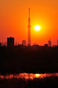 夕日とスカイツリーの写真素材 [FYI00388742]