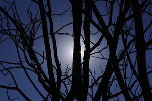 枯れ木と冬空の写真素材 [FYI00391950]
