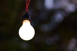 裸電球の写真素材 [FYI00391952]