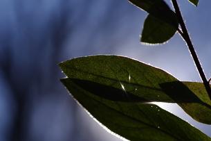 冬空と木の葉の素材 [FYI00392005]
