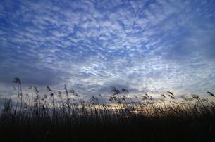冬の夕空と葦原の素材 [FYI00392137]