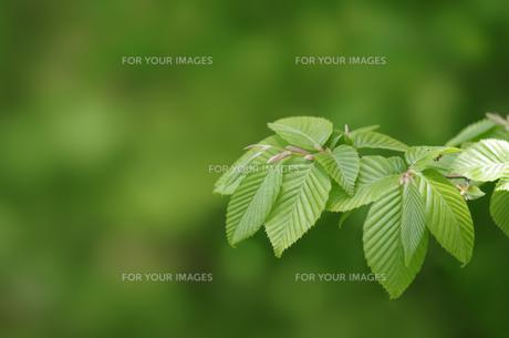 新緑の素材 [FYI00392140]