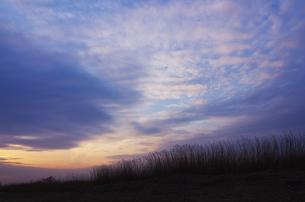 冬の夕空と葦原の素材 [FYI00392150]