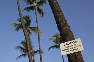 青空と椰子の木(ハワイ島)の写真素材 [FYI00392182]