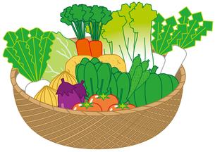 野菜の写真素材 [FYI00392290]