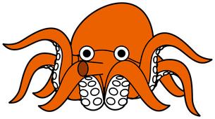 蛸の素材 [FYI00392435]