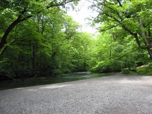 新緑の川の写真素材 [FYI00393120]
