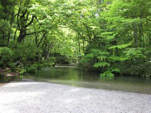 新緑の渓流の写真素材 [FYI00393131]