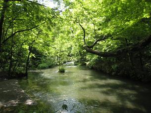新緑の川面の写真素材 [FYI00393140]