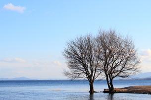 琵琶湖と落葉樹の素材 [FYI00393300]