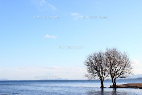 琵琶湖と落葉樹の素材 [FYI00393303]