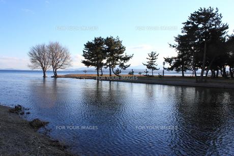 琵琶湖と木立の素材 [FYI00393304]