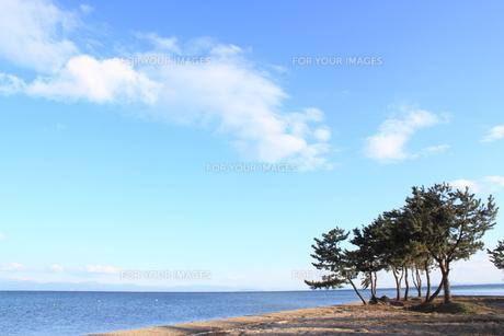 琵琶湖とマツの素材 [FYI00393305]
