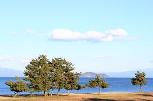 琵琶湖とマツの素材 [FYI00393307]