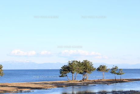 琵琶湖とマツの素材 [FYI00393309]