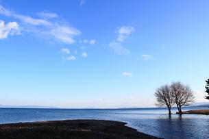 琵琶湖と落葉樹の素材 [FYI00393315]