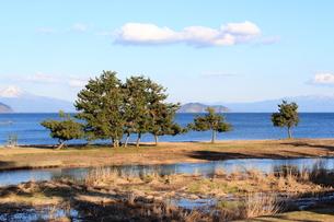 琵琶湖とマツの素材 [FYI00393316]