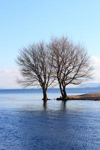 琵琶湖と落葉樹の素材 [FYI00393331]