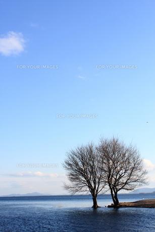琵琶湖と落葉樹の素材 [FYI00393332]