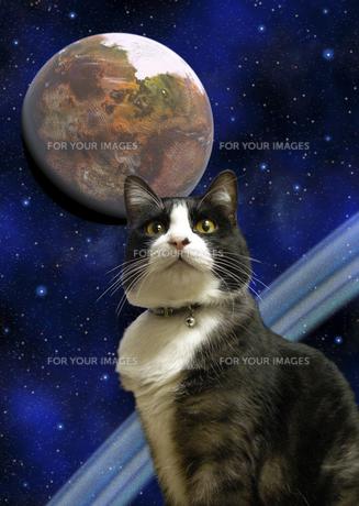宇宙と猫の素材 [FYI00393377]