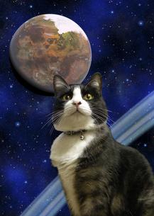 宇宙と猫の写真素材 [FYI00393377]