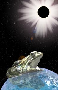 日食とカエルの素材 [FYI00393383]