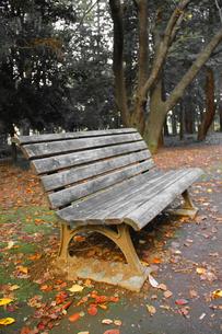 古びたベンチと色づく秋の写真素材 [FYI00393429]