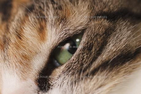 三毛猫の眼の写真素材 [FYI00393861]