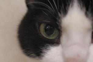 猫の瞳の虹彩の写真素材 [FYI00394057]