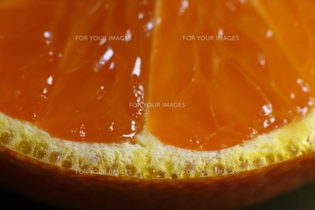 ミカンの皮の切断面(超マクロ)の写真素材 [FYI00394171]