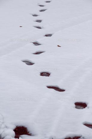 新雪の足跡の写真素材 [FYI00394526]