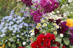 花壇の花いろいろ・2の写真素材 [FYI00395219]