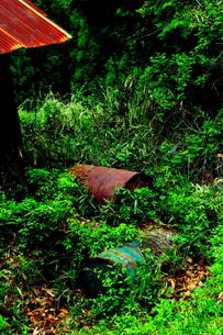 緑の中で朽ちるの写真素材 [FYI00395713]