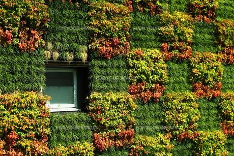 緑の窓(代官山複合施設・代官山保育園)の写真素材 [FYI00395902]