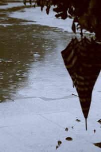 忘れ傘の写真素材 [FYI00395984]