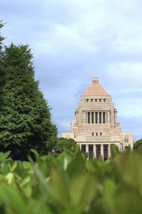 緑の中の国会議事堂(縦)の写真素材 [FYI00396039]