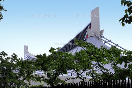 国立代々木競技場・第一体育館の屋根と街路樹の写真素材 [FYI00396287]