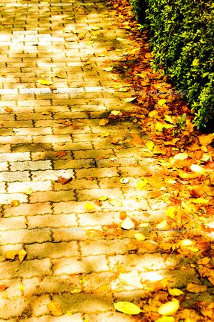 桜の落ち葉とレンガ道の写真素材 [FYI00396533]