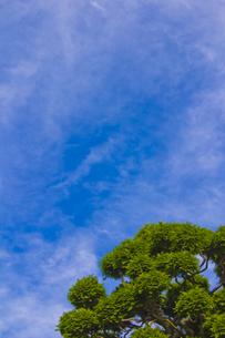 ヒノキと初秋の空の写真素材 [FYI00396584]