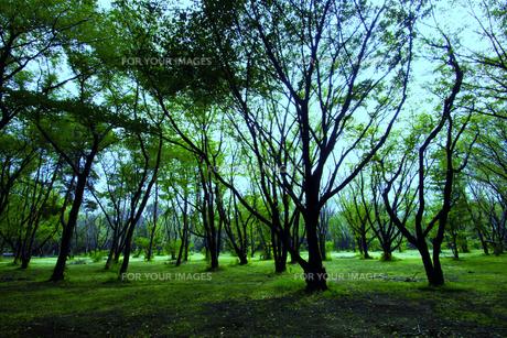 林の緑の写真素材 [FYI00396669]