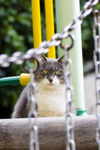公園の猫-1の写真素材 [FYI00396845]