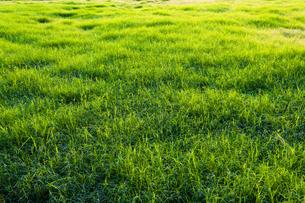 野原の緑の写真素材 [FYI00396878]