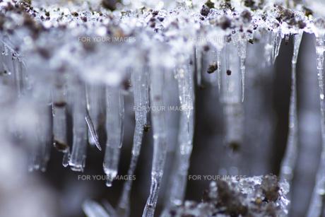 霜柱(アップ)-1の写真素材 [FYI00396940]
