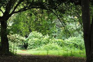 森の風景の写真素材 [FYI00396967]