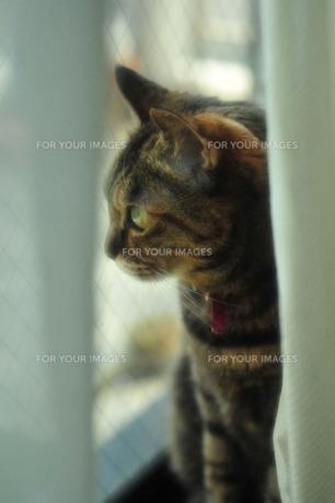 窓辺のネコの素材 [FYI00396994]