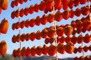 干し柿の写真素材 [FYI00397120]